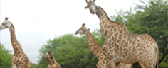 Accommodation - Marlothi Safari Park - Komatipoort, Malelane, Mpumalanga, Accommodation, Camping, Self-catering