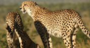 Contact Us - Marlothi Safari Park - Komatipoort, Malelane, Mpumalanga, Accommodation, Camping, Self-catering