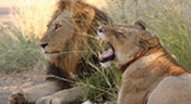 Welcome - Marlothi Safari Park - Komatipoort, Malelane, Mpumalanga, Accommodation, Camping, Self-catering